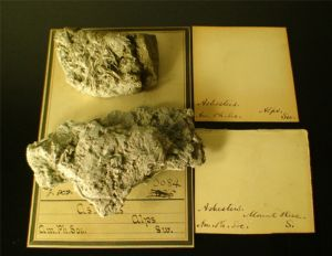 PNAS#004 Two Shared Swiss Amphibole Specimens